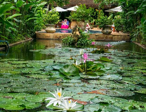 Resort and Spa Chiang Mai – Give Yourself a Well-Deserved Break