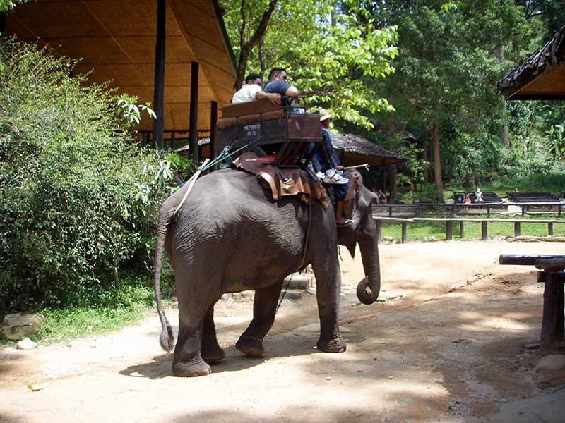 7 Days Cultural Packages - Ban Sabai Village Resort Chiang Mai